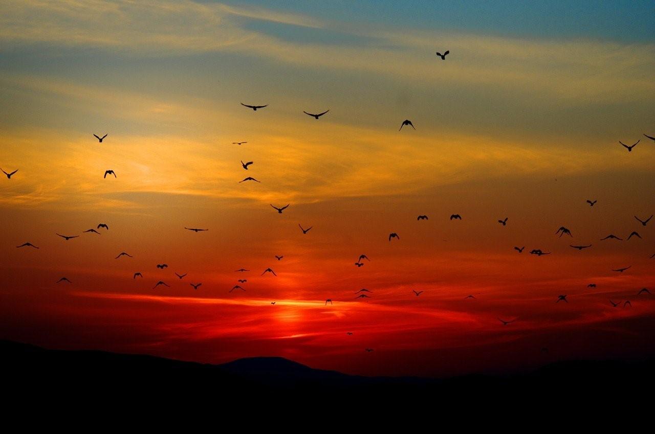 Observation des oiseaux en Italie en en Calabre